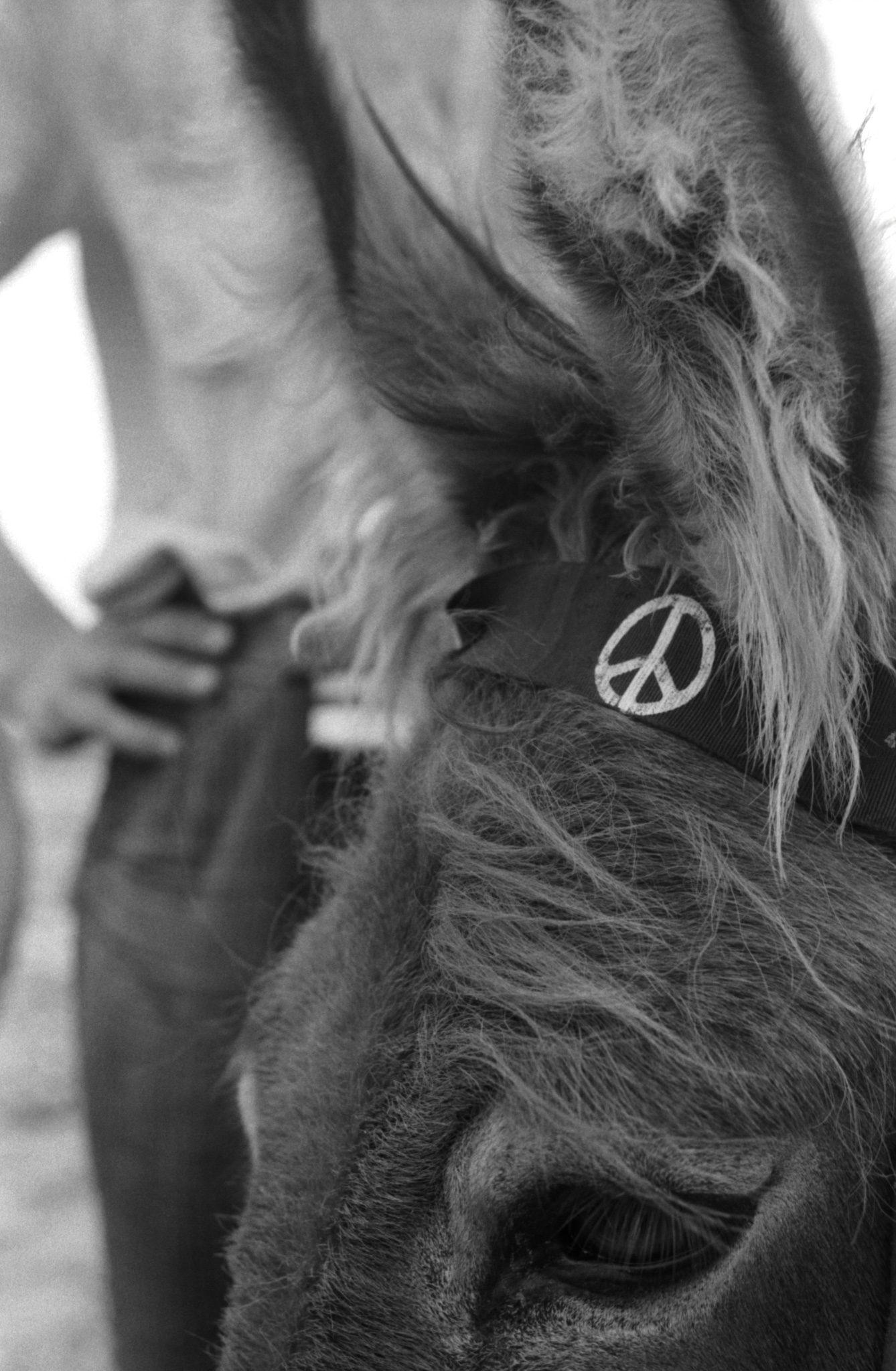 CND donkey