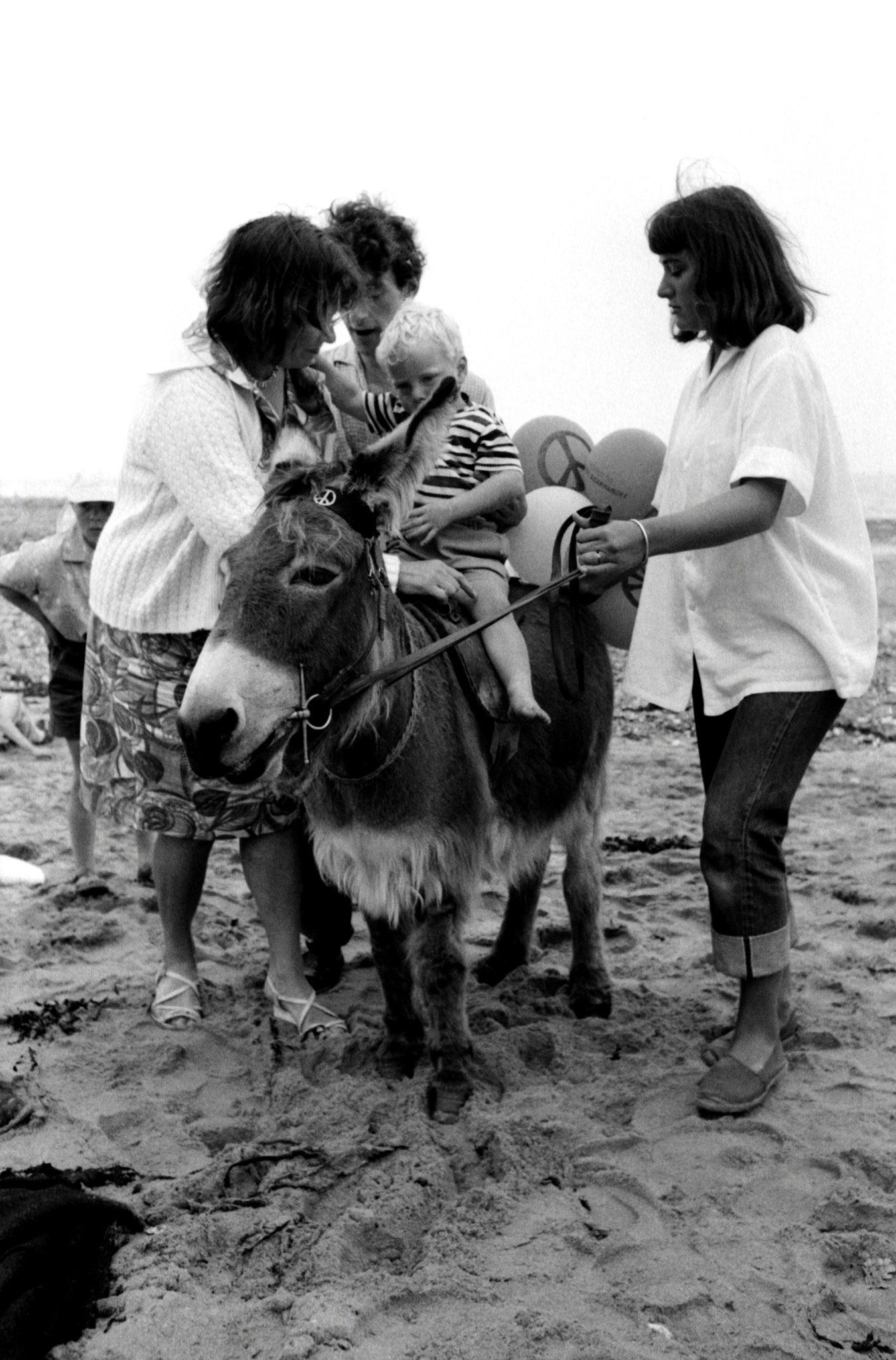 CND donkey 2